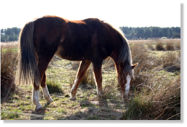 picture of one of our horse's at pembrey country park carmarthenshire
