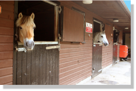 Image of horses in our livery stables at pembrey park riding centre carmarthenshire